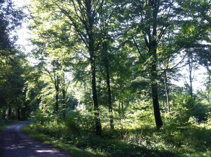 forêt d'Argonne
