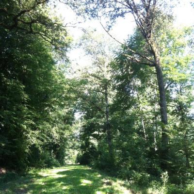 chemin vert en forêt d'Argonne