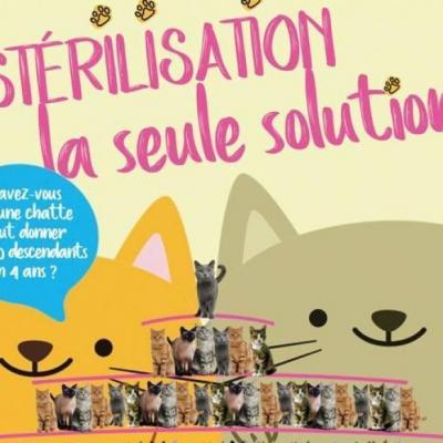 La spa organise une grande campagne de stn rilisation et d identification de chattes